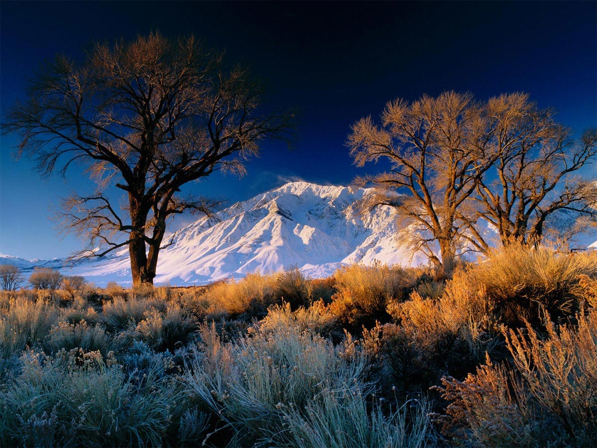 Mt. Tom Oaks, Bishop, CA Carmichael Productions, Inc. Landscape