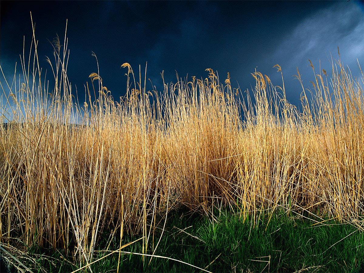 Storm Looms in Bishop, CA Carmichael Productions, Inc. Landscape