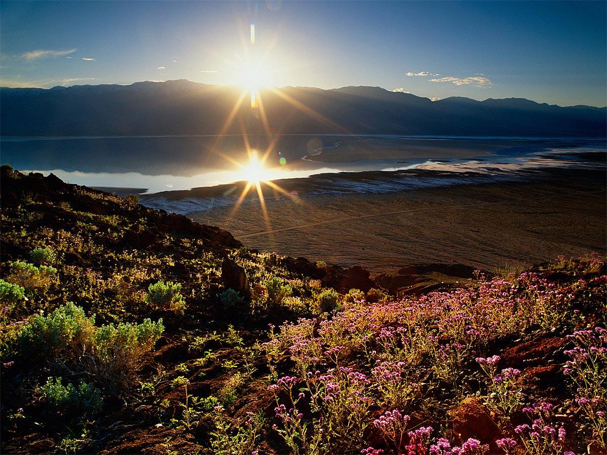 Sunset 100 Year Bloom Death Valley Carmichael Productions, Inc. Landscape