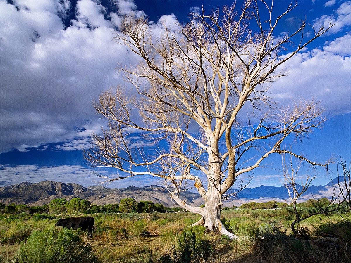 East Line Beautiful Dead Tree Carmichael Productions, Inc. Landscape