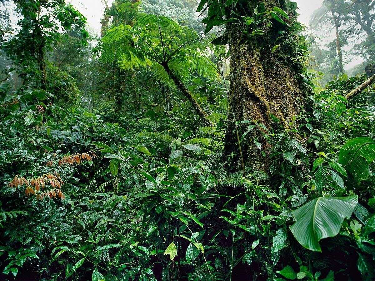 Monteverde National Cloud Forest Reserve, Costa Rica Carmichael Productions, Inc. Landscape
