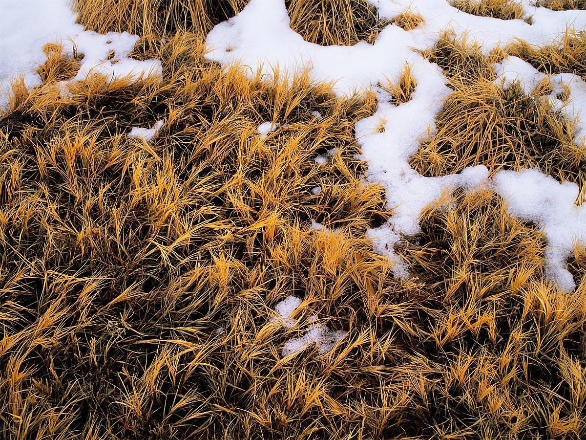 Winter Grass, Owens Valley, CA Carmichael Productions, Inc. Landscape