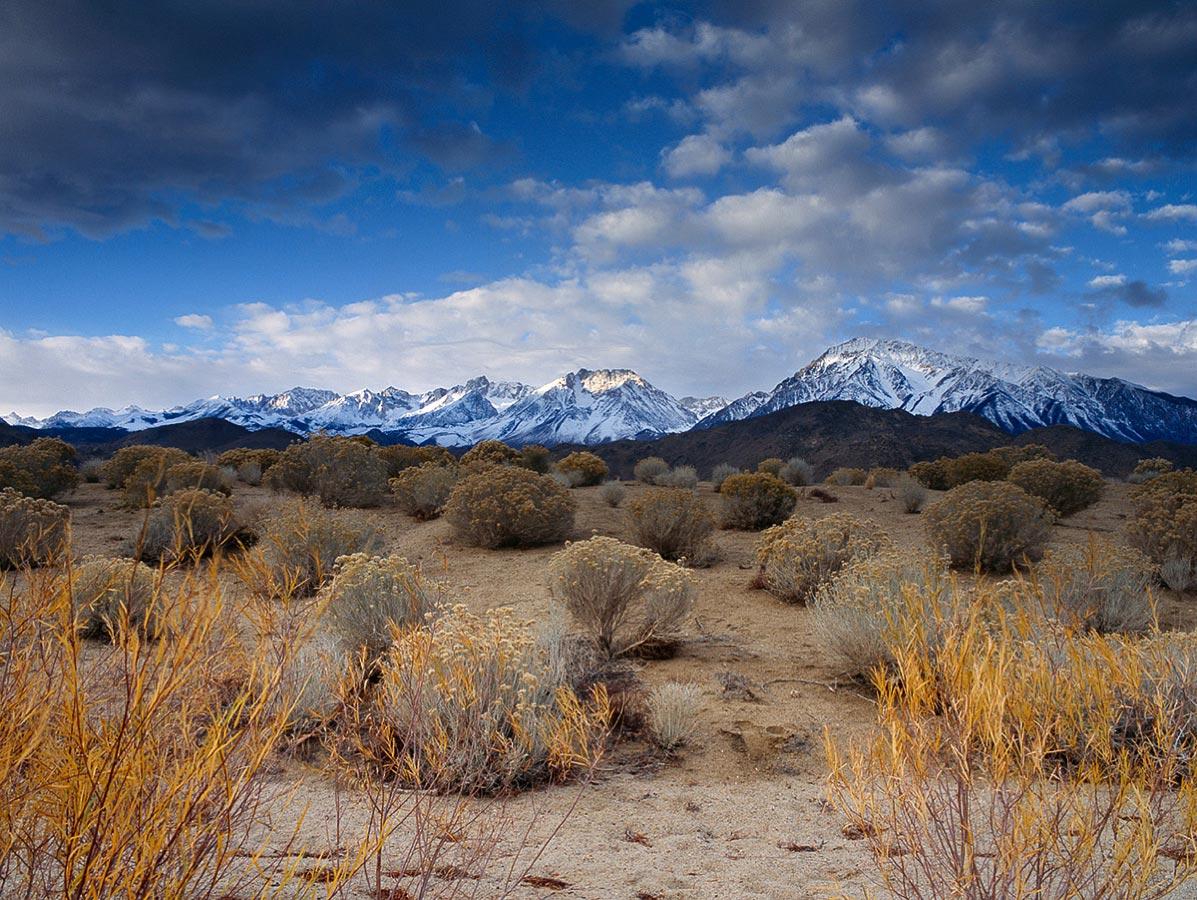 Desert Vegetation, Bishop Carmichael Productions, Inc. Landscape