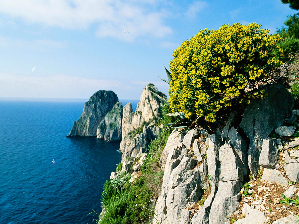 Overlooking theTyrrhenian Sea, CapriCarmichael Productions, Inc. Landscape
