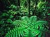 Ladder shot -Monteverde National Cloud Forest Reserve, Costa Rica Carmichael Productions, Inc. Landscape