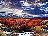 Red Alder at Sunset, Bishop, CA Carmichael Productions, Inc. Landscape
