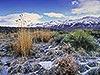 Winter Range, Bishop, CA Carmichael Productions, Inc. Landscape