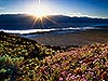 Death Valley - 100 year bloom Carmichael Productions, Inc. Landscape
