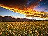 Lone Pine, Sierra Wave Carmichael Productions, Inc. Landscape