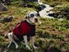 Carmichael Productions Inc Boulder Pet Portraits