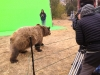 Colorado Production Service Company: Carmichael Productions, Inc. Bear Green Screen